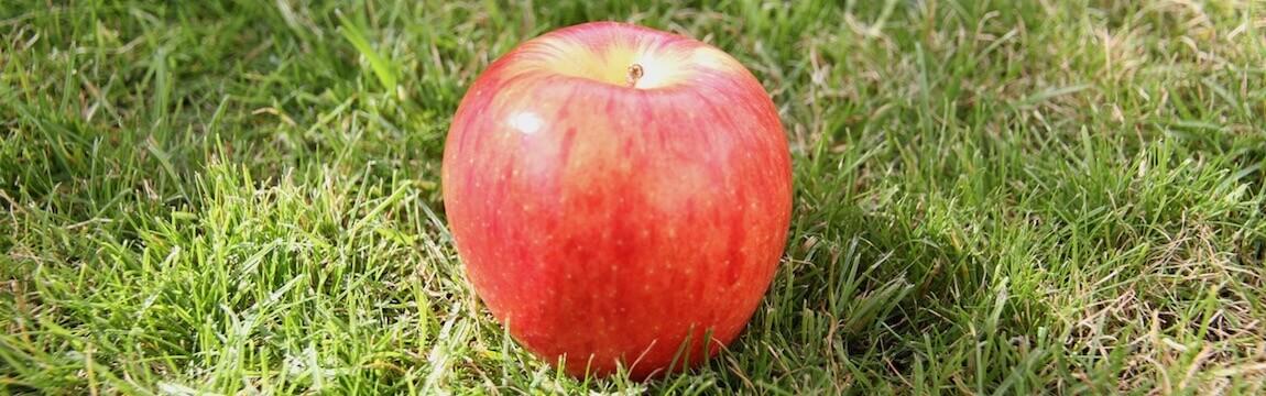 Apfel von Elbe-Obst auf einer Wiese im Alten Land