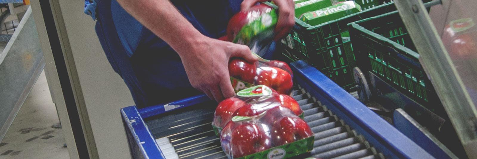 Red Prince Aktionsverpackungen von Elbe-Obst aus dem Alten Land