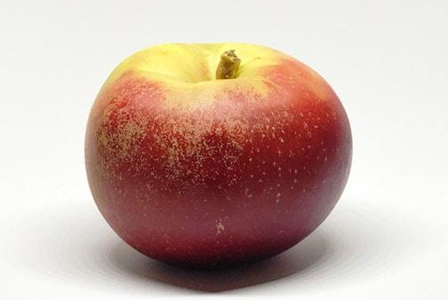 Apfelsorte Boskoop von Elbe-Obst aus dem Alten Land