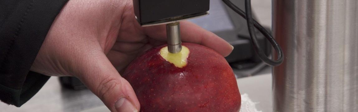 Elbe-Obst Qualitätssicherung Prüfung der Druckfestigkeit bei Äpfeln