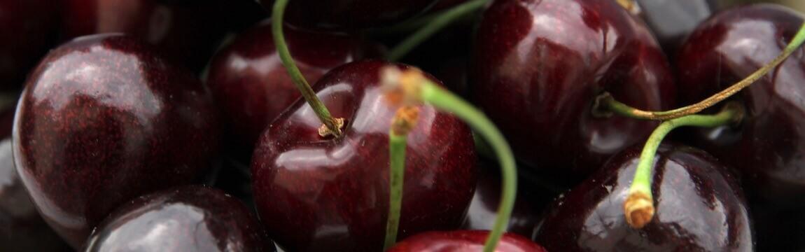 Kirschen von Elbe-Obst aus dem Alten Land