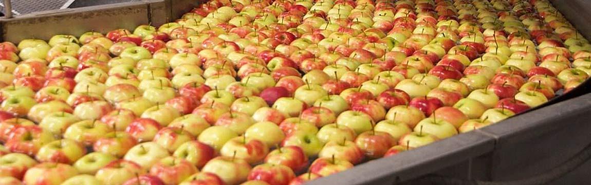 Prozessaufbereitung Apfel