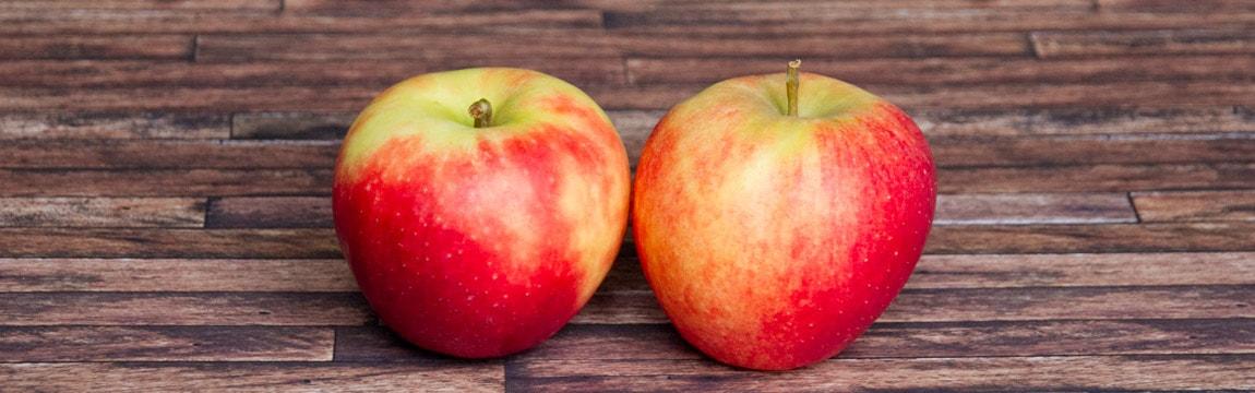 Apfelsorte Estar von Elbe-Obst aus dem Alten Land