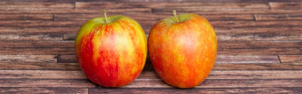 Apfelsorte Holsteiner Cox von Elbe-Obst aus dem Alten Land
