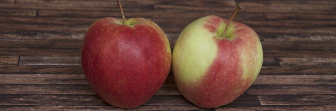 Apfelsorte Gloster von Elbe-Obst aus dem Alten Land