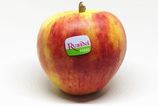 Rubens mit Label Apfelsorte Rubens von Elbe-Obst aus dem Alten Land