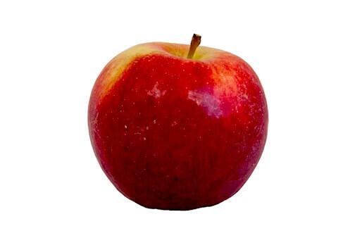 Apfelsorte Ingridmarie von Elbe-Obst aus dem Alten Land