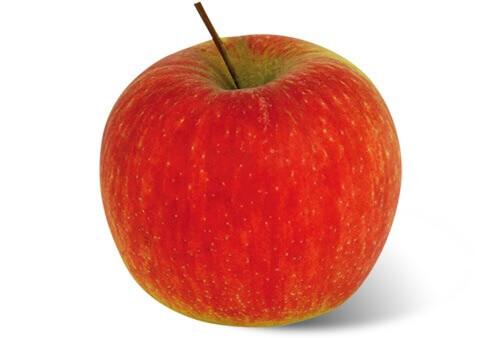 Apfelsorte Ambassy von Elbe-Obst aus dem Alten Land
