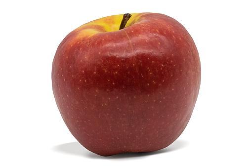 Die neue Apfelsorte Fräulein